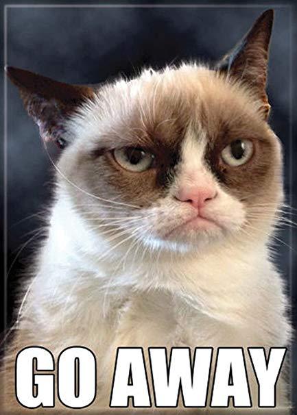 cheerful Grumpy cat memes