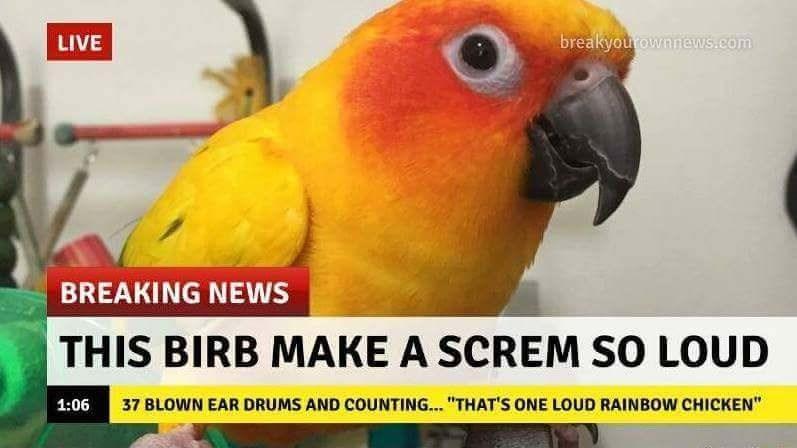 cheerful birb memes