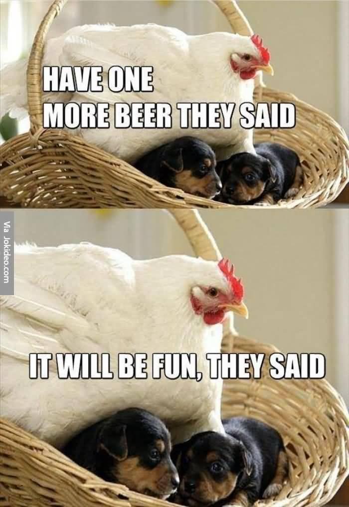 cheerful chicken memes