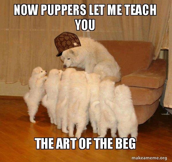 cheerful puppy memes