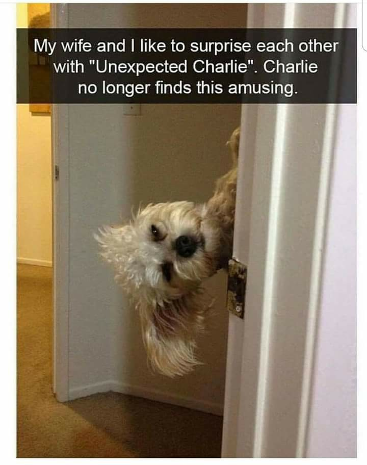 chucklesome puppy memes