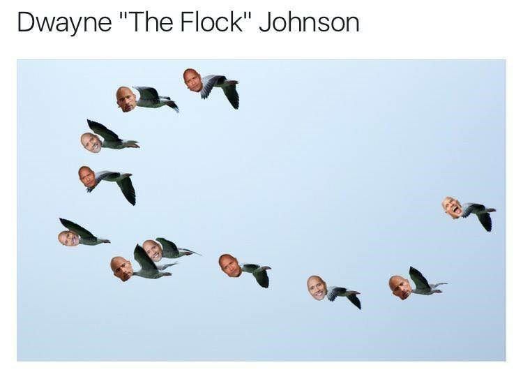 "comic Dwayne Johnson ""The Rock"" memes"