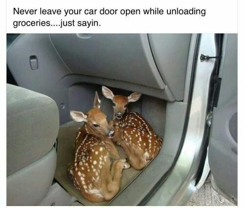 comical Animal memes