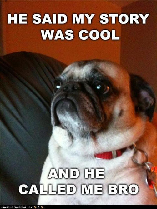 comical Pug memes