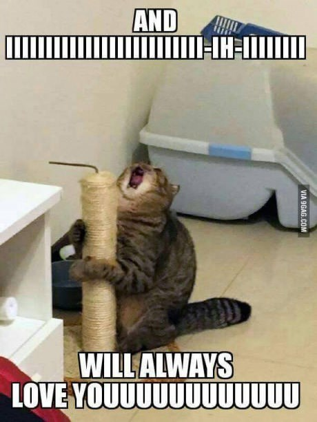 droll, Animal memes