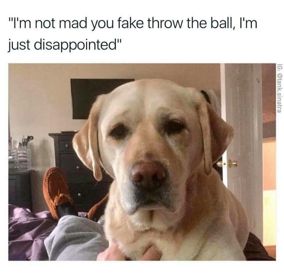 entertaining puppy memes