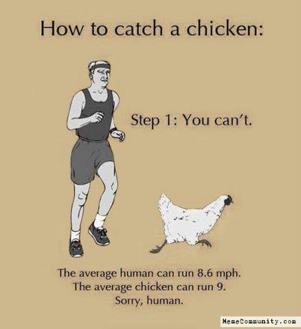 high-spirited chicken memesx