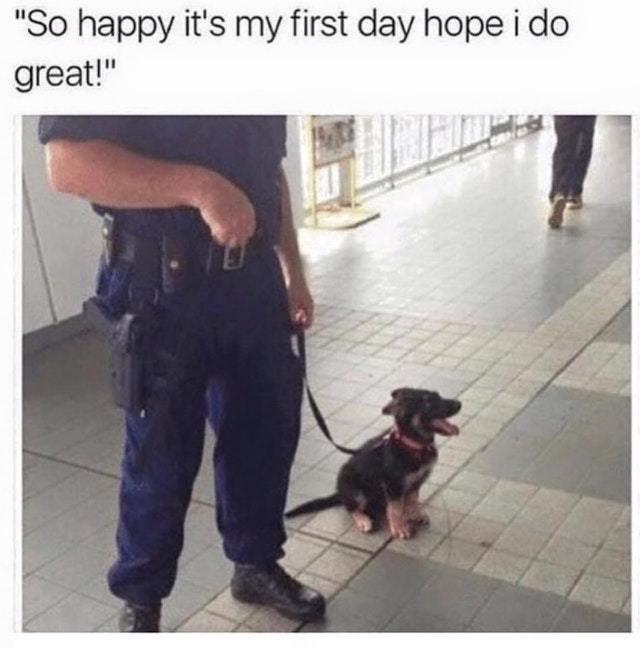 high-spirited puppy memes