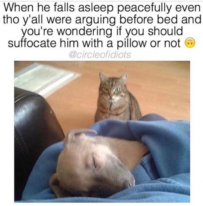 humorous Animal memes
