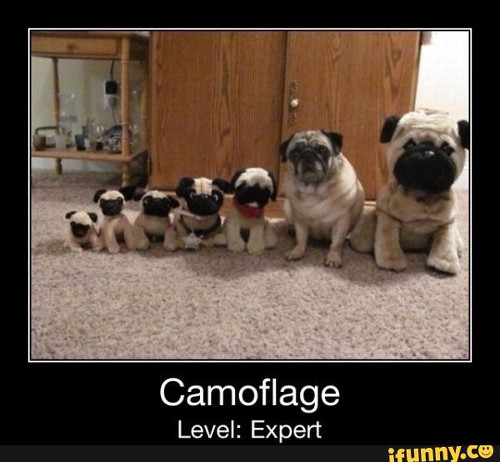 humorous Pug memes