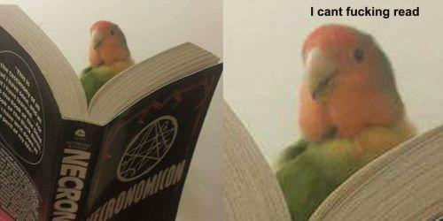 humorous birb memes