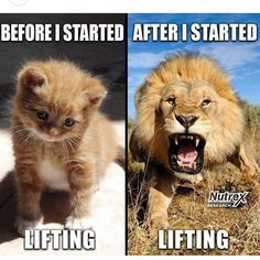 humorous fitness memes