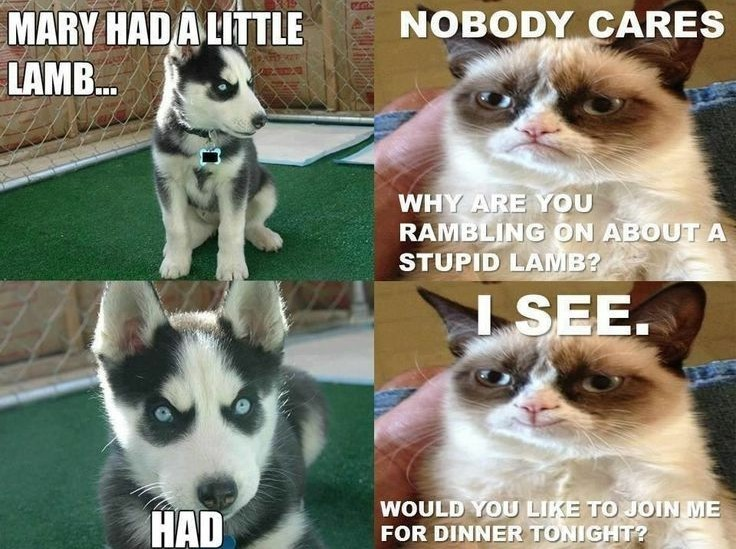 humorous puppy memes