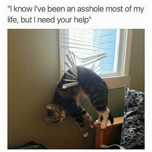 jolly Animal memes