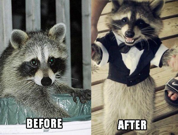 jolly Rocket raccoon memes