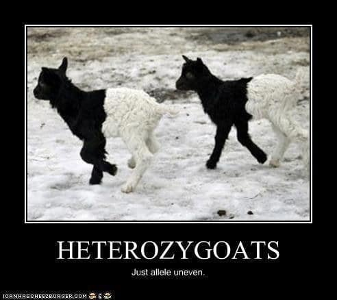 jolly Science memes