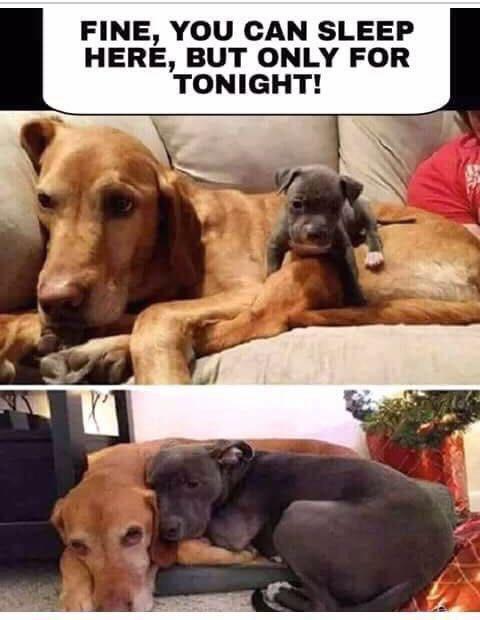 jolly puppy memes