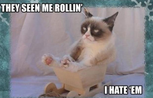 laughable Grumpy cat memes