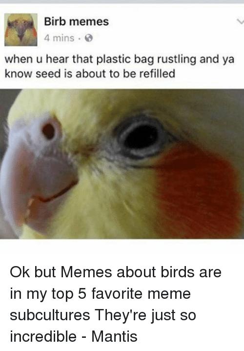 laughable birb memes