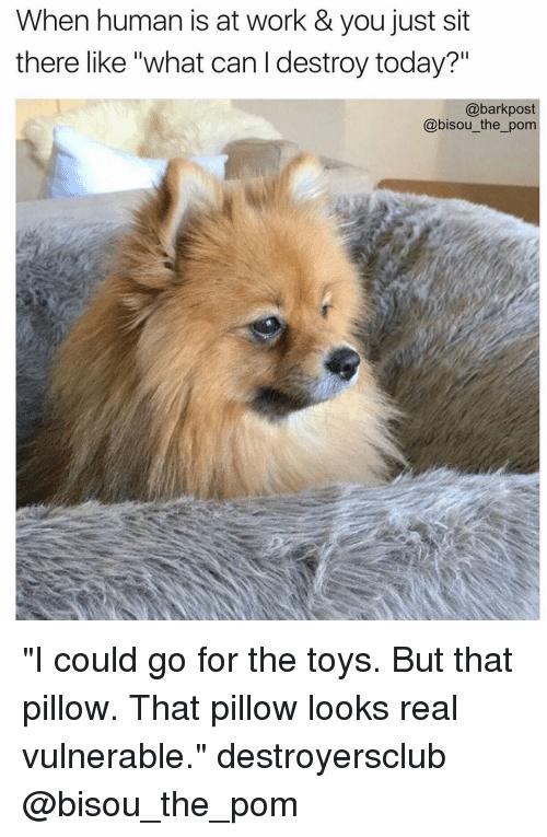 rib-tickling Pom memes