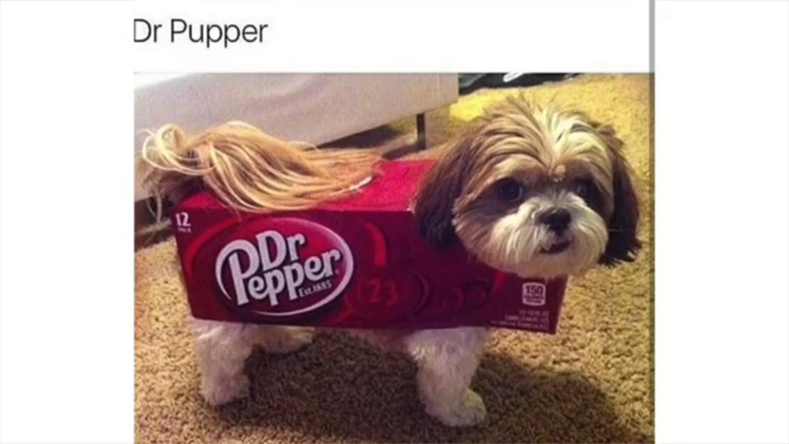 rib-tickling puppy memes