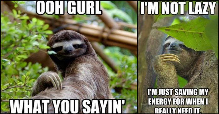110 Funny Sloth Memes Are Slow Yet Special Geeks On Coffee