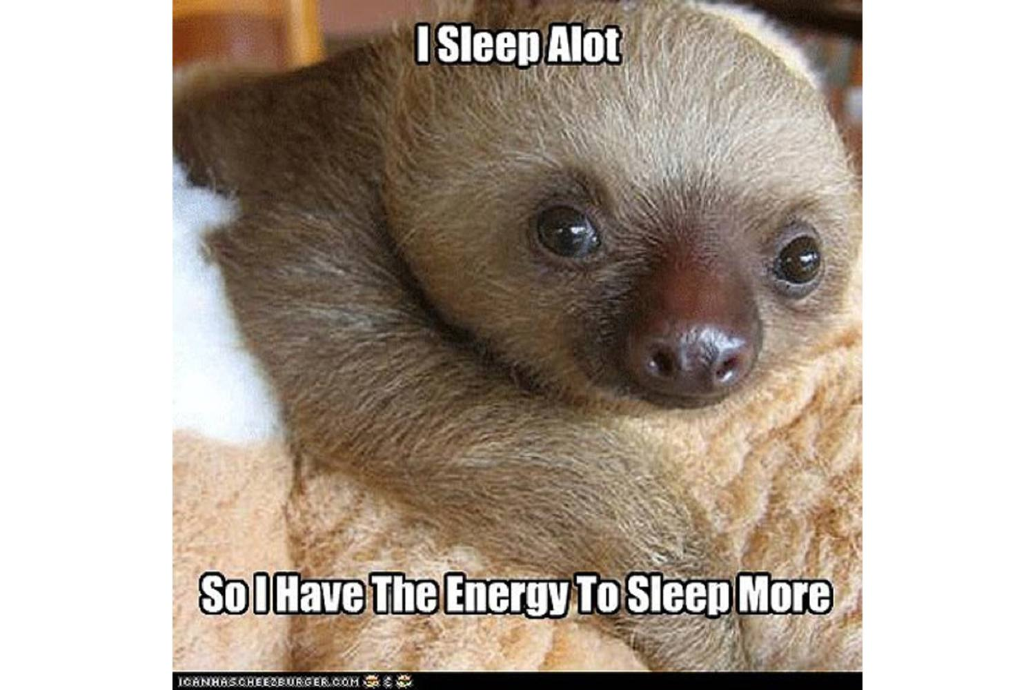 110+ Funny Sloth Memes Are Slow Yet Special | GEEKS ON COFFEE