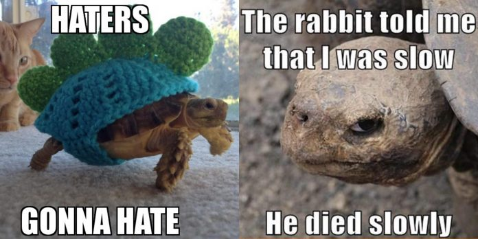 100 + Turtle Memes That Are Funny And Witty