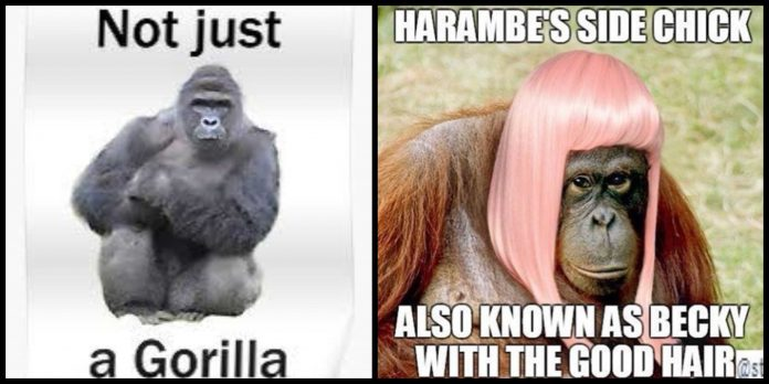 90+ Harambe The Gorilla Memes That Are So Relatable