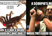 90+ Scorpio Memes That Every Scorpions Will Relate To.