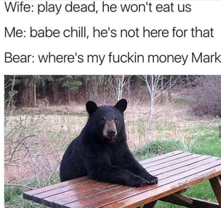 Funny bear memes