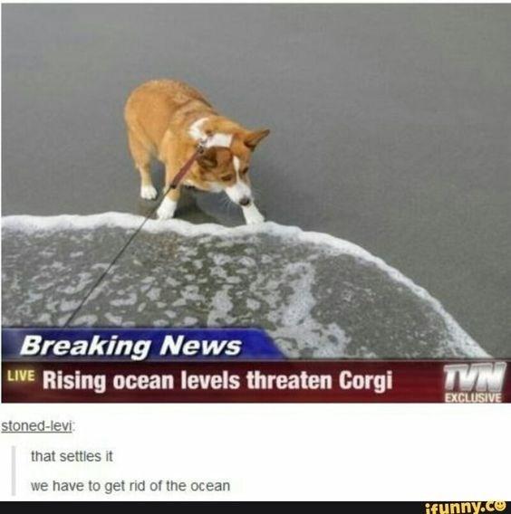 Funny corgi memes