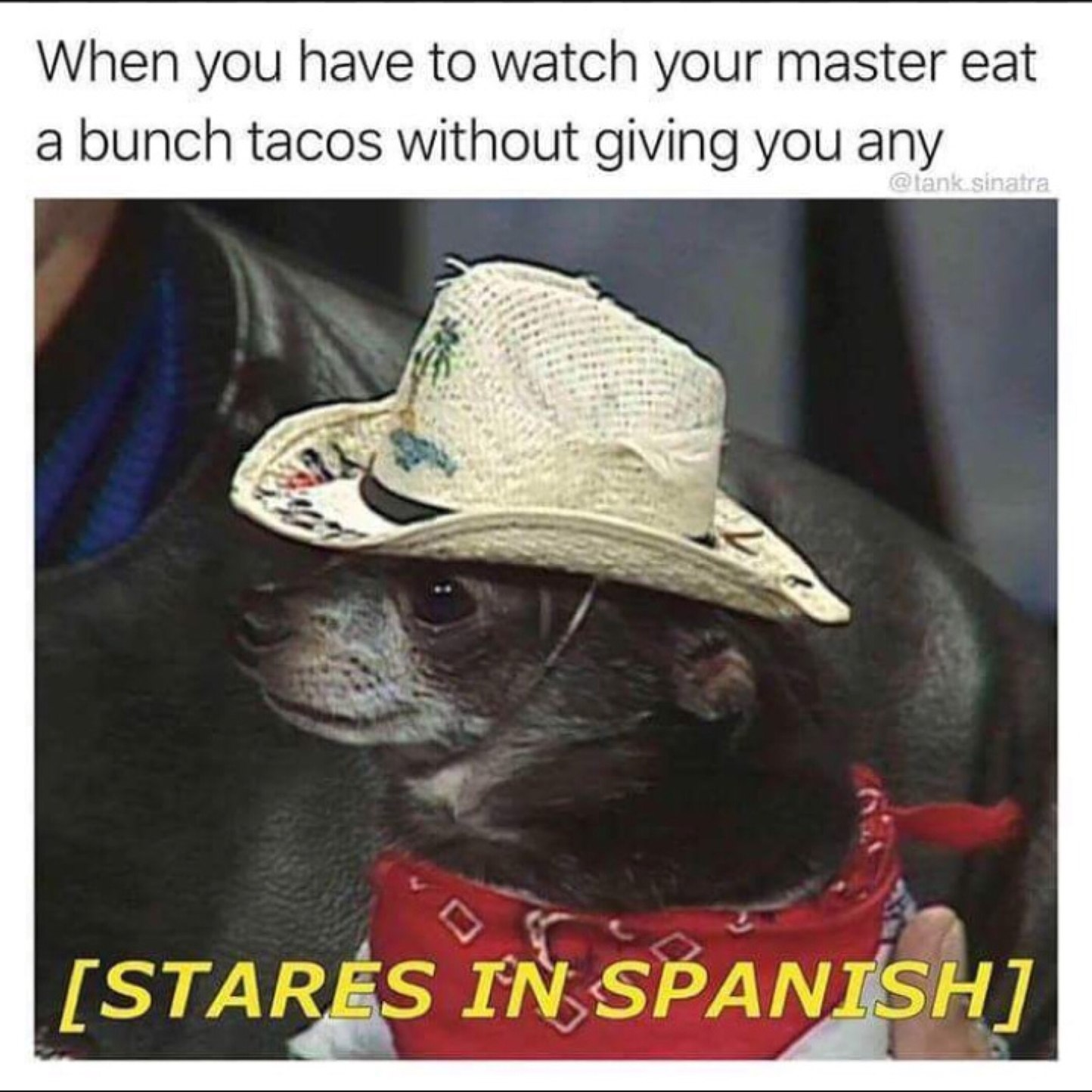 Funny taco meme