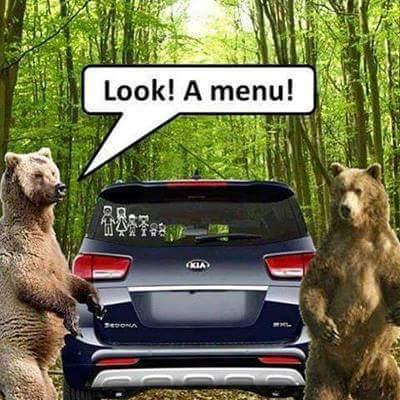 Hilarious bear memes