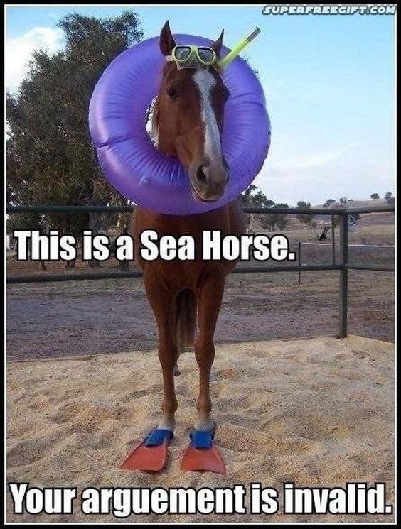 Hilarious horse memes