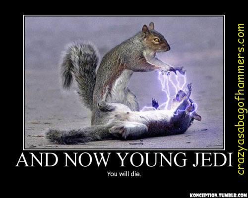 Hilarious squirrel meme