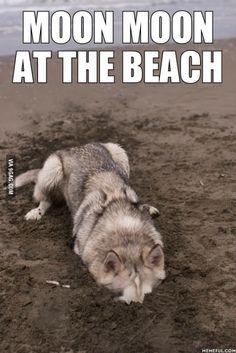 amusing Moon Moon memes
