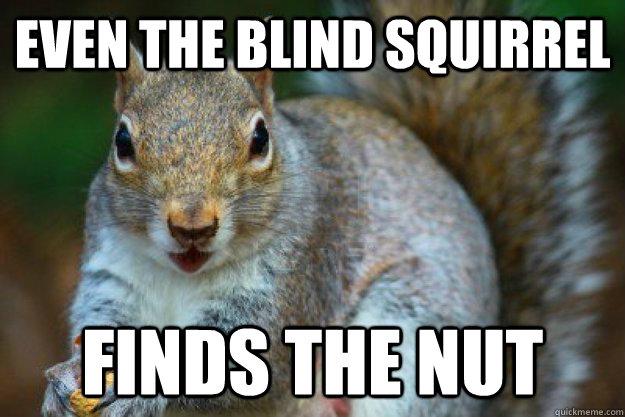 amusing nut memes