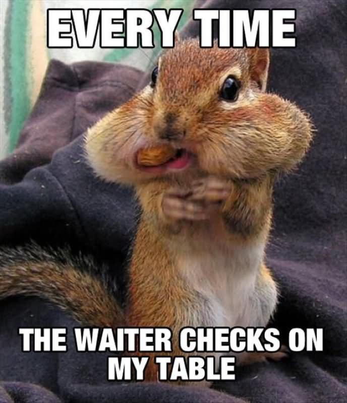 amusing squirrel meme