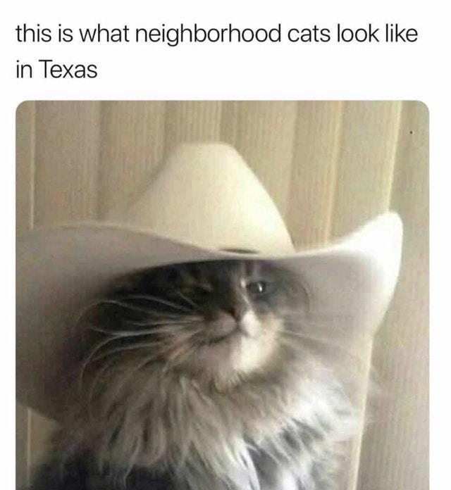 amusing texas memes