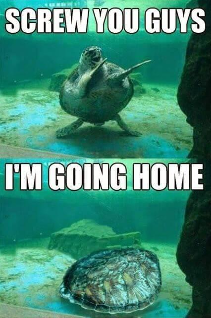 amusing turtle meme