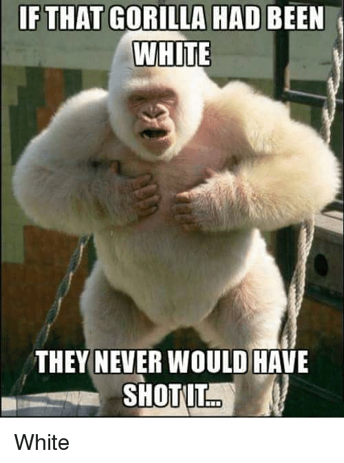 animated Harambe the Gorilla memes