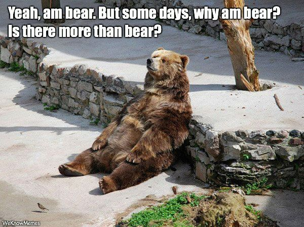 animated bear memes