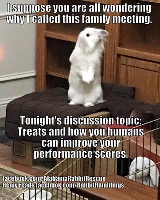 animated bunny memes