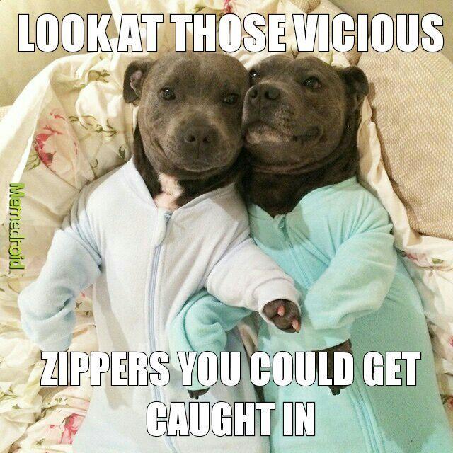 animated pitbull memes