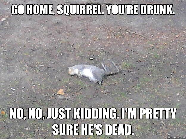 animated squirrel meme
