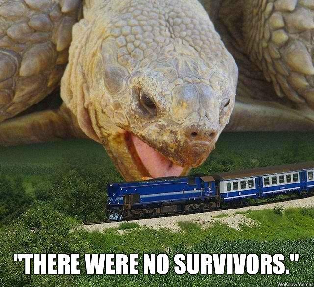animated turtle meme