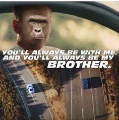 cheerful Harambe the Gorilla memes