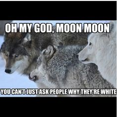 cheerful Moon Moon memes