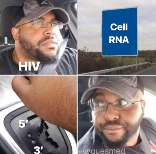 cheerful biology memes